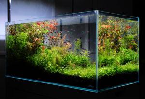 水草水槽1
