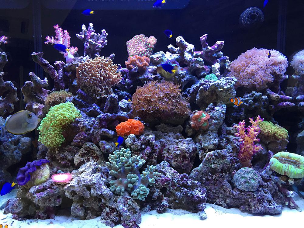 サンゴ水槽1000